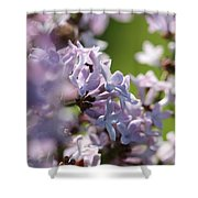 Common Purple Lilac Shower Curtain