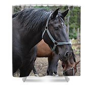 Cooke City Horses Shower Curtain