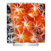 Coral, Close-up Shower Curtain