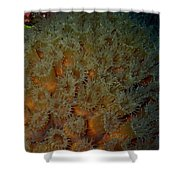 Coral Feeding At Night Shower Curtain