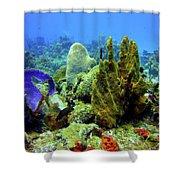 Coral Head Shower Curtain