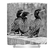 Cormorant Trio Shower Curtain