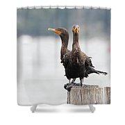 Cormorants Port Jefferson New York Shower Curtain