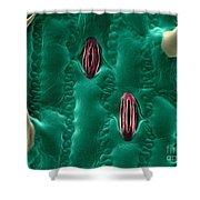 Corn Leaf Stomata, Esem Shower Curtain