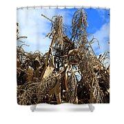 Corn Stalks Drying In The Sun Shower Curtain