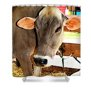 Cow 2 Shower Curtain