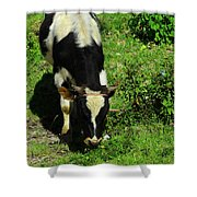 Cow In A Field Shower Curtain