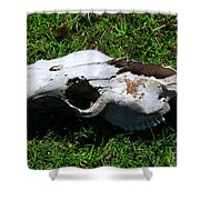 Cow Skull In A Field Shower Curtain