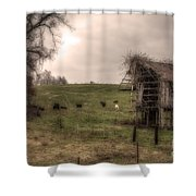 Cows In A Field By A Barn Shower Curtain