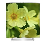 Cowslip Shower Curtain