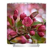 Crab Apple Blossom Shower Curtain