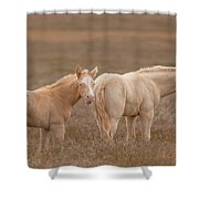 Cremello Brothers Shower Curtain