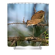 Crested Hornero Shower Curtain