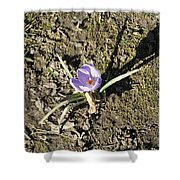 Crocus 1 Shower Curtain