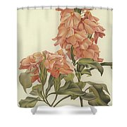 Crossandra Shower Curtain