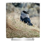 Crow In The Gras Shower Curtain
