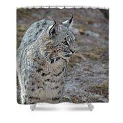 Curious Wandering Bobcat Shower Curtain