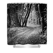 Curving Trail Entering Deciduous Forest Shower Curtain