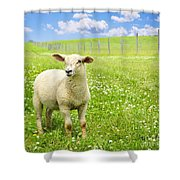 Cute Young Sheep Shower Curtain