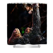 Cypress Knees Shower Curtain