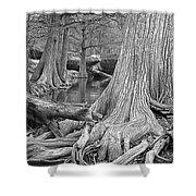 Cypress Trees I V Shower Curtain