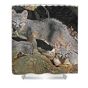 D-a0072 Fox Family On Our Mountain Shower Curtain
