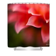 Dahlia Edges Shower Curtain