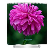 Dahlia Field Shower Curtain