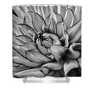 Dahlia In Black And White Close Up Shower Curtain