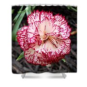 Dainty Dianthus Shower Curtain
