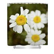 Daisies #1 Shower Curtain