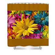 Daisies Petals Shower Curtain