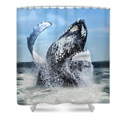 Dances With Whales Shower Curtain
