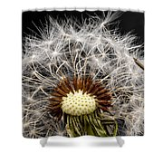Dandelion Seed Shower Curtain