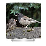 Dark-eyed Junco Mother And Baby Shower Curtain