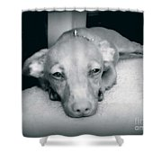 Day Dreaming Doxie Shower Curtain