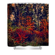 Day In The Woods  Shower Curtain
