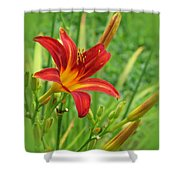Daylily On Green Shower Curtain