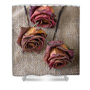 Dead Roses Shower Curtain