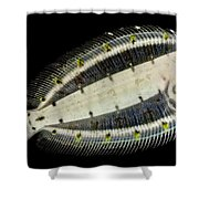 Deepwater Dab Shower Curtain