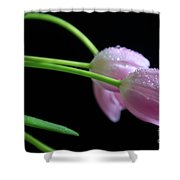 Delicacy Shower Curtain by Tracy Hall