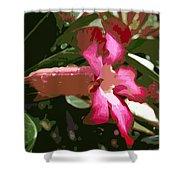Desert Rose  Adenium Obesum Shower Curtain