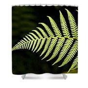 Detail Of Asian Rain Forest Ferns Shower Curtain