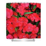Dianthus Shower Curtain