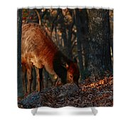 Dinnertime Shower Curtain