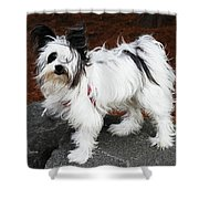 Dog At The Port Of Olympia Shower Curtain