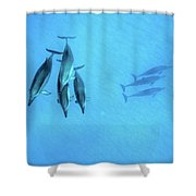 Dolphins At Rest Shower Curtain
