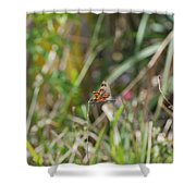 Dragon Fly Shower Curtain