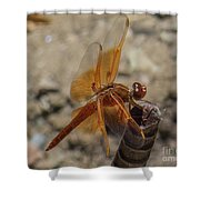 Dragonfly 18 Shower Curtain