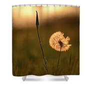 Dream Flower Shower Curtain